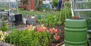 SJSM Allotments